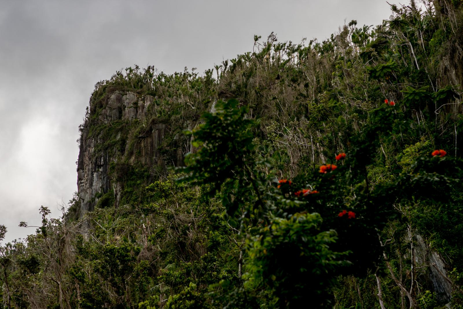 Loveshoot Regenwoud El Yunque